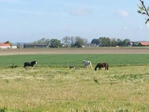 Heste. St. bededagsferie