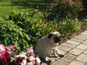 Hund, havearbejde, St. bededagsferie