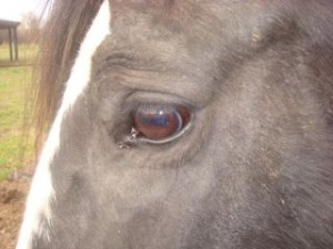 så fantastisk og helt magisk og fint i arbejdet med hestene