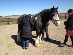 Hestene ved godt, hvad vi gemmer i hjertet, for de har direkte adgang.