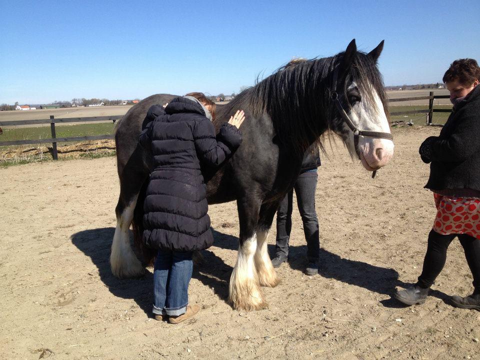 Nu tør nogle forskere sige det som hestene viser i vores arbejde…