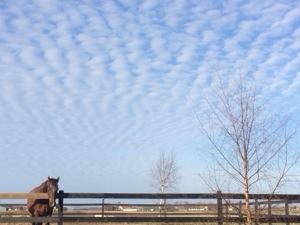 Uddannelse i hesteassisteret coaching og energiarbejde