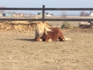 Polle far uddannelse i hesteassisteret coaching og energiarbejde