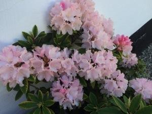 Smuk St. bededagsferie - Blomster